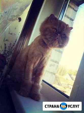 Стрижка кота Монастырщина