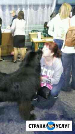 Передержка животных Саранск