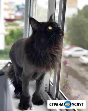 Стрижка кошек без наркоза с выездом к вам на дом Томск