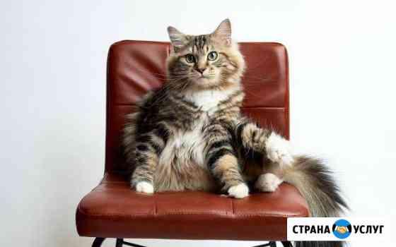 Передержка кошек Сыктывкар
