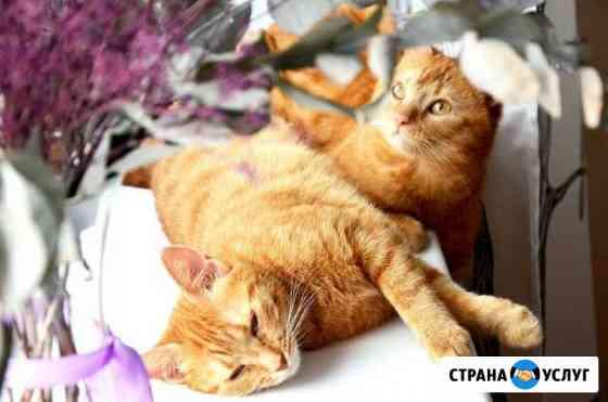 Мяухаус-зоогостиница для кошек Петрозаводск