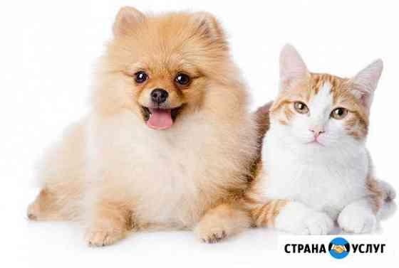 Аккуратная стрижка собак мелких пород и кошек Пенза