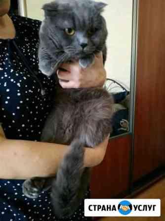 Стрижка кошек / экспресс-линька кошек и собак Махачкала