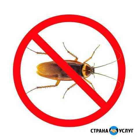 Дезинсекция. Выводим тараканов, клопов и др. насек Владимир