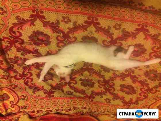 Передержка домашних питомцев(кошек, грызунов,птиц) Пенза