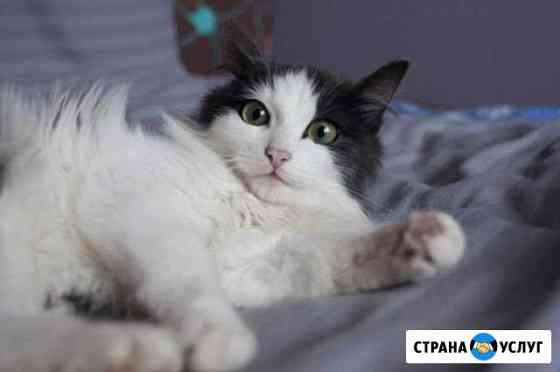 Передержка для кошечек Томск