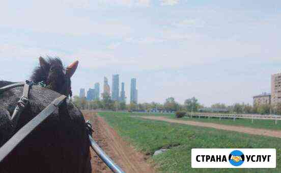 Подготовка лошадей: скачки, бега(рысь, иноходь), к Черкесск