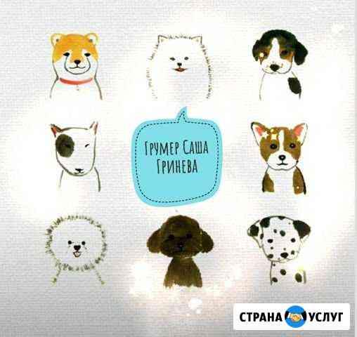 Стрижка мелких пород собак до 12 кг, кошек.Груминг Ставрополь
