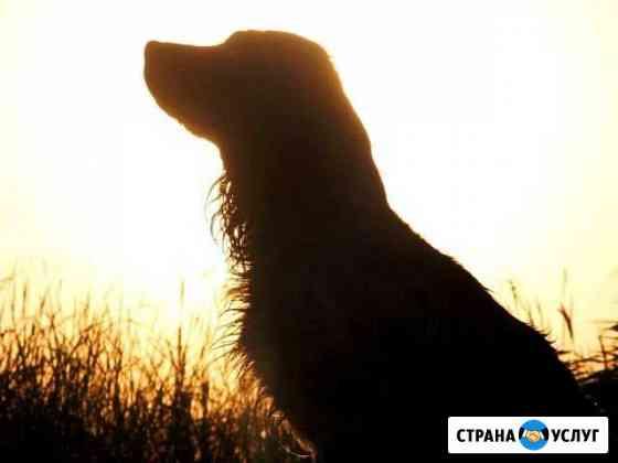Дрессировка собак Новочебоксарск