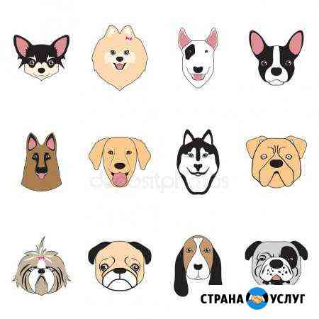 Передержка собак Петропавловск-Камчатский