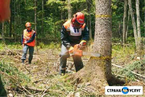 Спил деревьев Будённовск