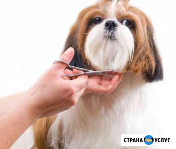 Груминг собак и кошек Петропавловск-Камчатский