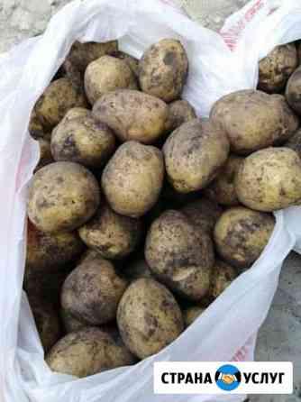 Продажа картофеля Саранск