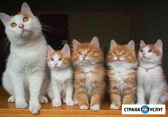 Гостиница для домашних животных Балаково