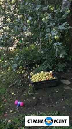 Яблоки Екатеринбург
