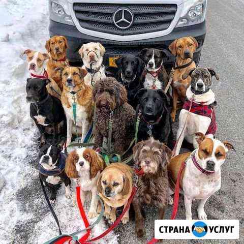 Дог-ситтер (выгуливатель собак) Тольятти