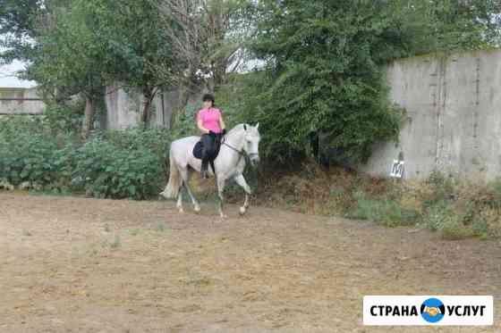 Конные прогулки Волгоград