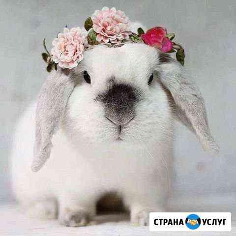 Стрижка кошек, собак Ноябрьск