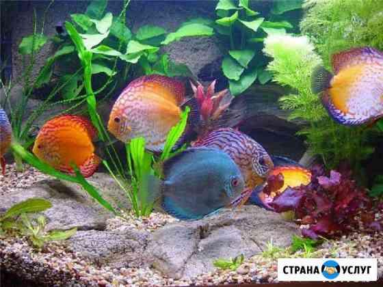 Чистка, обслуживание и оформление аквариумов Чебоксары
