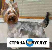 Стрижка собак, кошек и др.животных Саранск