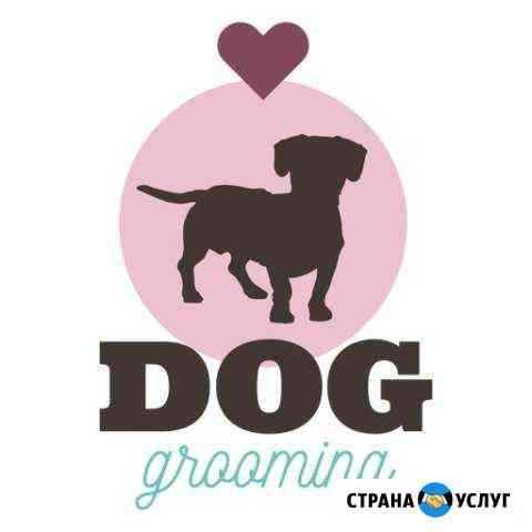 Стрижка собак и кошек Петропавловск-Камчатский