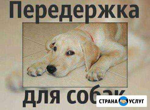 Передержка собак,щенков Чита