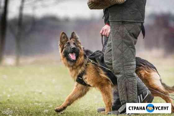 Дрессировка собак Кострома