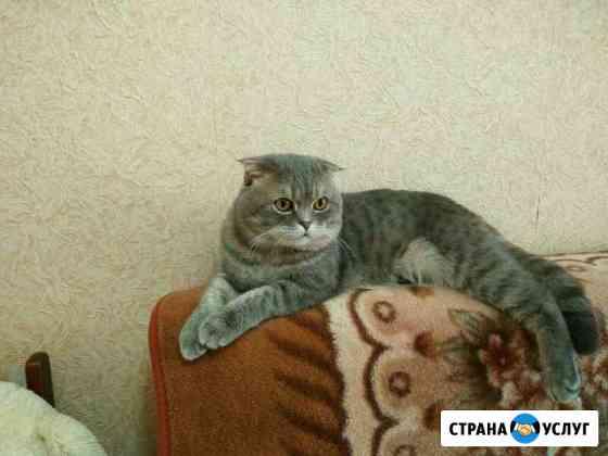 Услуги вязки Саранск