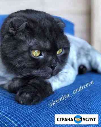 Стрижка кошек Чебоксары
