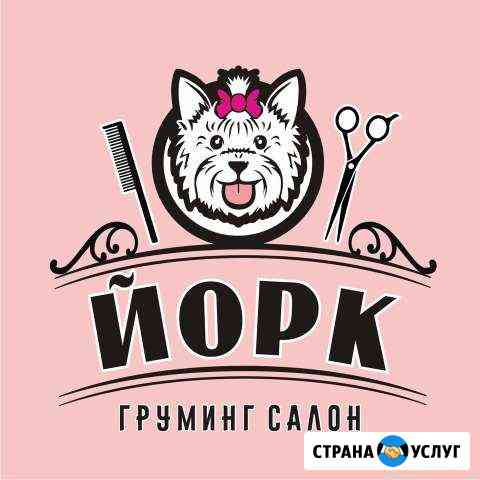 Стрижка собак и кошек г. Кострома Кострома