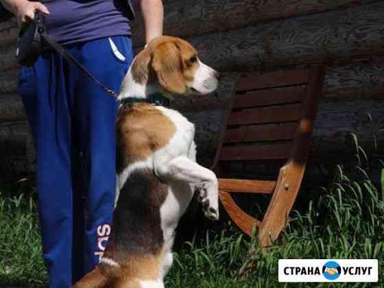 Гостиница передержка для животных : кошки собаки Пенза