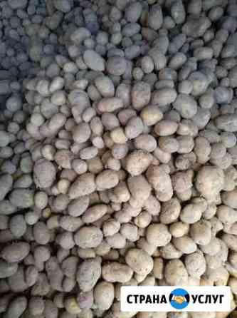 Продам картофель Череповец