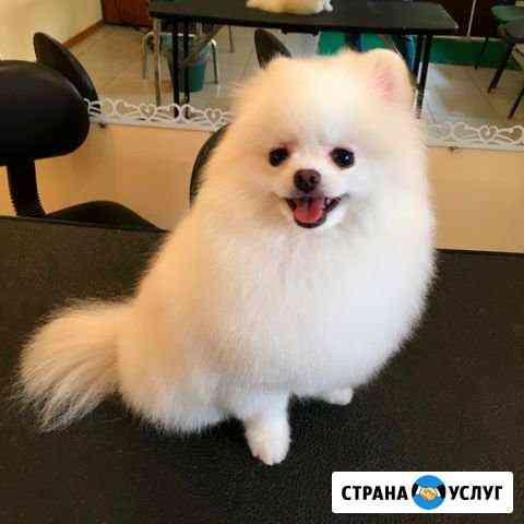 Груминг собак Томск