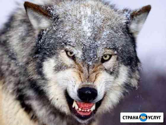 Услуги охраны Северодвинск