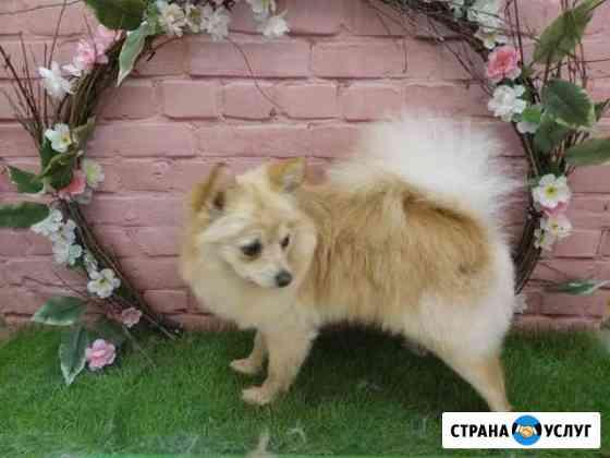 Стрижка собак (грумер ) Томск