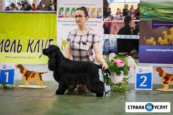 Подготовка собак к выставке, хендлинг Киров