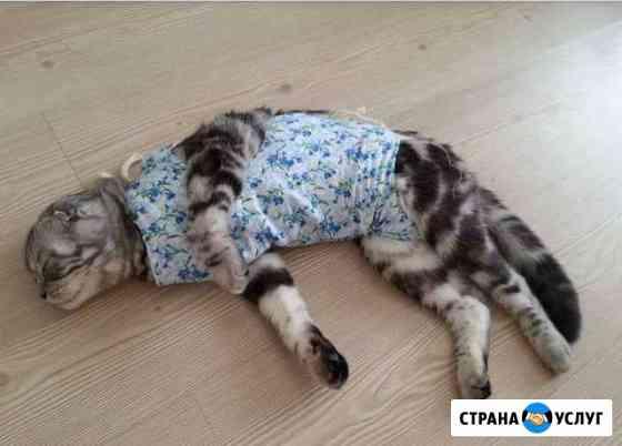 Стерилизация/кастрация кошек и собак на дому Волгоград