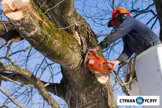 Спил деревьев. Краснодар, Край, Агроном, Динская Динская