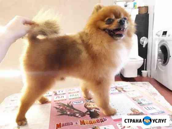 Груминг, стрижка собак Подольск
