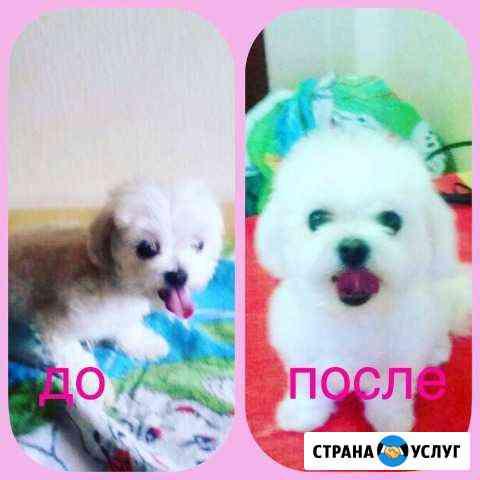 Стрижка собак Нальчик