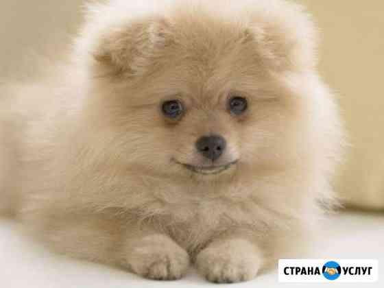Стрижка кошек и собак Кузнецк