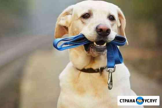 Выгул собак Ухта
