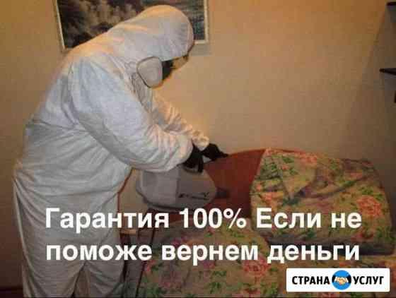 Уничтожение клопов, обработка от тараканов Краснодар