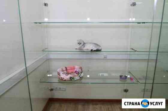 Зоогостиница для животных, кошек и собак, зооотель Оренбург