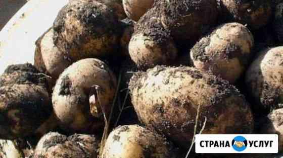 Картофель с доставкой Чита
