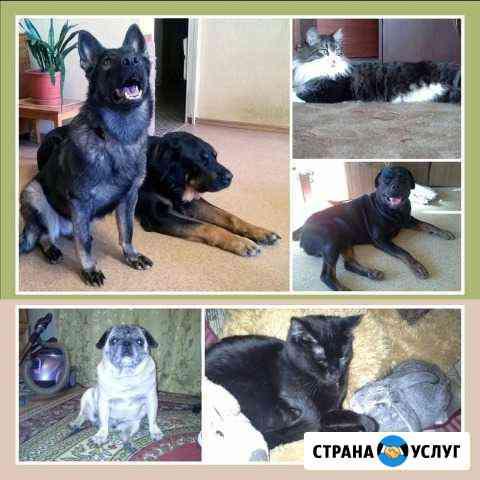 Передержка животных Петропавловск-Камчатский