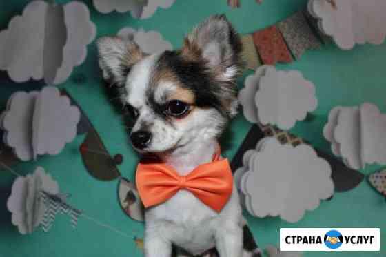 Стрижка собак и кошек (груминг) Чистка зубов Яблоновский