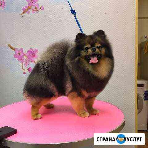 Стрижка собак (груминг) Кострома