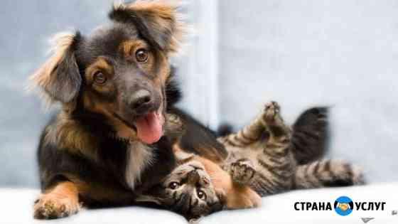 Передержка и выгул собак и кошек Мурманск