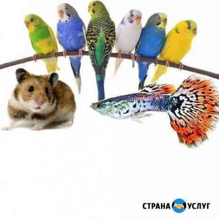 Передержка домашних животных Смоленск
